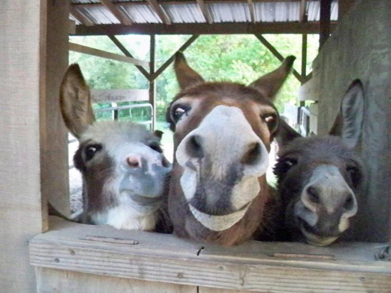 donkey greetings